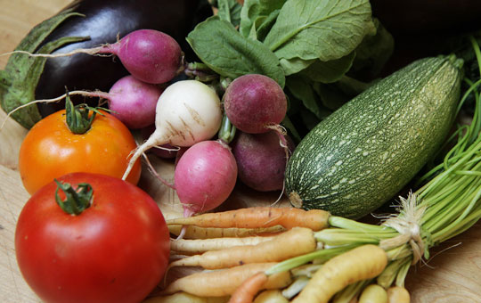 radish,squash,tomatoes,eggplant,carrots
