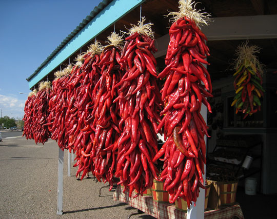 Ristras of fresh New Mexico red chile