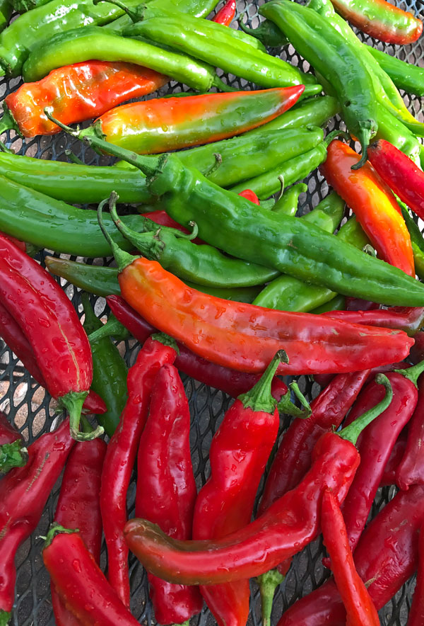 How to roast chile peppers #hatchchile #NewMexico #chile @mjskitchen