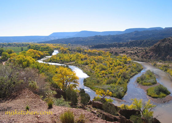 Cottonwoods turning on the Rio Chama, northern New Mexico