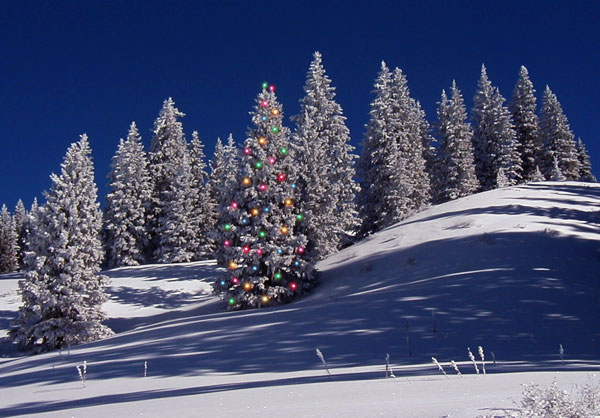 Happy Holidays! Snow scene with lighted tree | mjskitchen.com
