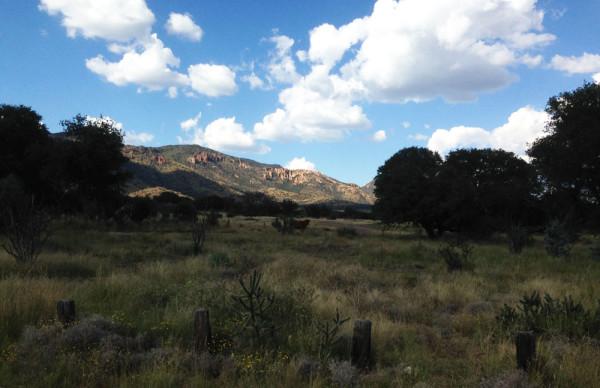 View of the Davis Mountains on the road to Ft. Davis, TX. mjskitchen.com