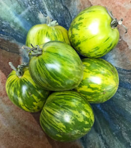 Unripe green zebra heirloom tomatoes, used for fried green tomato tacos | mjskitchen.com