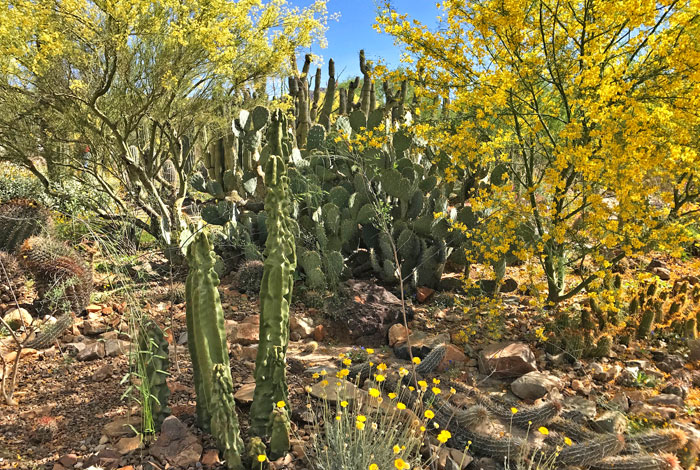 The cactus garden at the Desert Museum, Arizona | mjskitchen.com