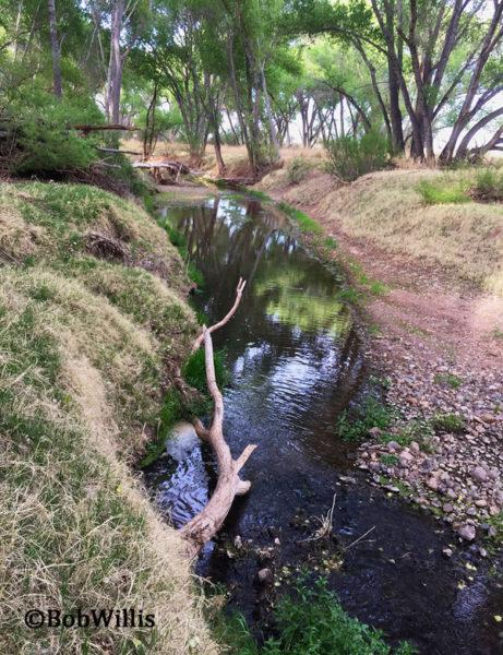 San Pedro River Bosque in SE Arizona | mjskitchen.com