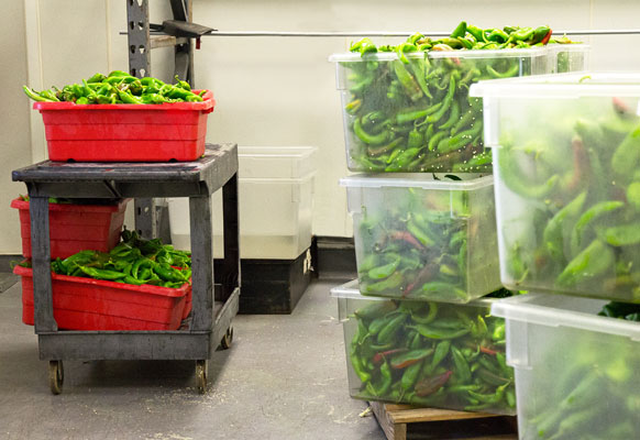 The Hatch Chile Store sells Hatch chile roasted, peeled, chopped and packaged. #Hatchchile mjskitchen.com