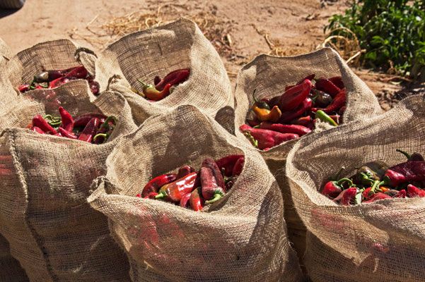 September is the start of red chile season in Hatch, New Mexico. @mjskitchen