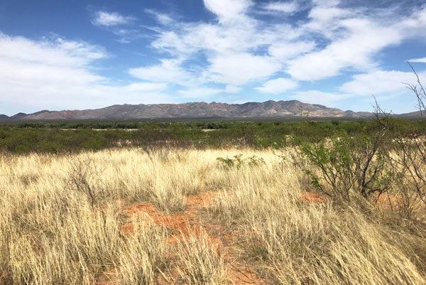 The San Pedro River Valley in SE Arizona | mjskitchen.com